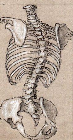 how to draw tears Skeleton Drawings, Skeleton Art, Cool Art Drawings, Art Drawings Sketches, Anatomy Sketches, Anatomy Drawing, Skeleton Anatomy, Human Anatomy Art, Arte Indie