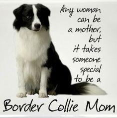 Made me cry. :) ❤ #bordercolliemom