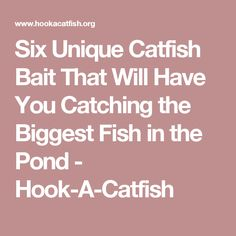 Six Unique Catfish Bait That Will Have You Catching the Biggest Fish in the Pond - Hook-A-Catfish