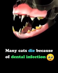 Cat Self-Cleaning Toothbrush Katzenliebhaber Crazy Cat Lady, Crazy Cats, Cat Ages, Daily Health Tips, Here Kitty Kitty, Funny Animal Pictures, Pet Health, Pet Care, Fur Babies