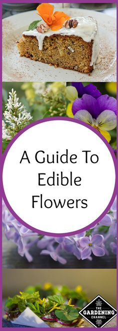 Guide to edible flowers. As you read this complete list of edible flowers you will see some that you may already have planted in your garden. Try adding them to your plate.