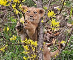 this cub is a cutie! :D