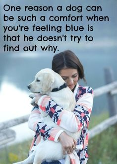 Mind Blowing Facts About Labrador Retrievers And Ideas. Amazing Facts About Labrador Retrievers And Ideas. Cute Puppies, Cute Dogs, Dogs And Puppies, Doggies, Love My Dog, Puppy Love, Golden Retriever, Labrador Retriever, Dog Rules