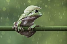 LESSY SEBASTIAN - It Is A Rainy Days - Picture Of The Day - ONE EYELAND  2013-11-25