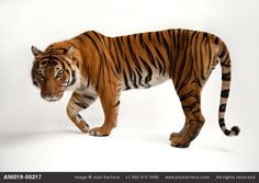 Photo Ark - Greatest Hits - Joel Sartore