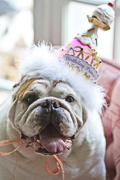 every dog should have a birthday party!