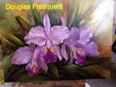 orquideas - Douglas Frasquetti