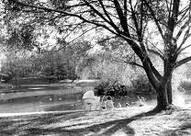 Manito Park pond, Spokane Washington...one of my favorite places; my hometown!