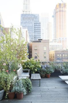Roof Garden Visit: At Home with Vanity Fair Art Director Julie Weiss in Manhattan: Gardenista
