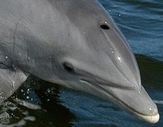A pregnant dolphin and her unborn baby were found dead as a result of being shot with a gun. This horrifying incident is sadly not unique, but must not be allowed to stand. Demand justice for these innocent creatures.