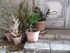 IMG_7622.jpg translation - I made a plant similar to aloe ( name I do not know )