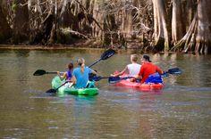 Kayaking in Manatee Springs State Park