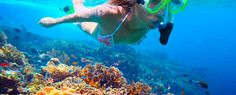 Snorkeling, Scuba Diving and Freediving
