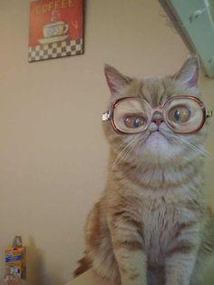 Funny cat! :)