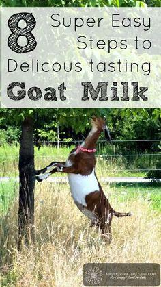 "Make Goat Milk Taste Like Cow Milk Homesteading  - The Homestead Survival .Com     ""Please Share This Pin"""