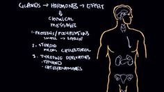 Endocrine system and influence on behavior part 1
