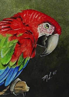 Parrot painting by Melody Lamb
