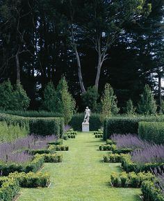 Boxwood (Buxus Sempervirens) and English Lavender (Lavandula Angustifolia).