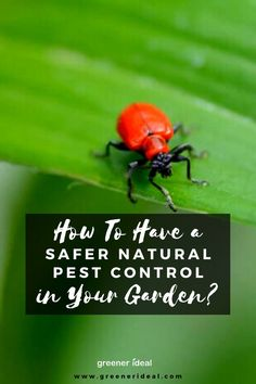 Pest control is cause for anyone to be concerned about how the products will affect you, the environment, and your family, pets, and wildlife. While many people consider this when using pest control products in their gardens by choosing products suitable for natural or organic use, safe pest control indoors is just as important. Luckily there are several types of naturally derived products available to keep you and your family safe while getting rid of bugs. #pest #PestControl #Gardening #tips