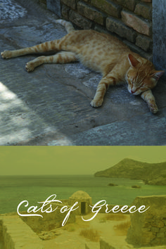 I came across these Grecian cats on a trip some years ago. Journeying to foreign lands has almost always been spurred by my desire to explore a fresh landscape for one of my books. This was no exception. Book Lovers, Cat Lovers, Life Partners, Almost Always, My Books, Greece, Romance, Fresh, Explore