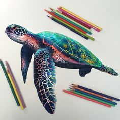 Colored pencil study of a sea turtle.