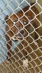 13-0122 is an adoptable Pit Bull Terrier Dog in Emporia, KS. Found at 305 Melody. Available Feb 22 if not claimed....