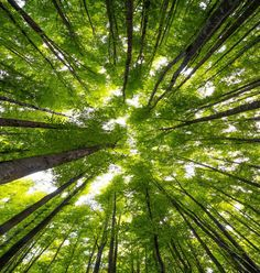"""The Japanese call it shinrin-yoku. In English, this phrase means """"forest bathing"""". And when you take a quiet, non-strenuous walk in the woods, you are..."""