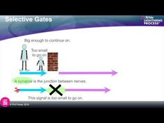 (28) Synapses - how nerve signals work. Phil Parker - YouTube