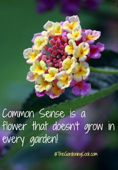 Common sense is a flower that doesn't grow in every garden.    See more flower quotes:  http://thegardeningcook.com/gardening-quotes-and-inspirational-sayings/
