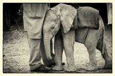 Elephant Emotions
