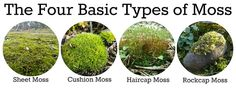 The Four Basic Types of Moss: Sheet Moss, Cushion Moss, Haircap Moss, and Rockcap Moss garden box Garden Types, Diy Garden, Indoor Garden, Garden Plants, House Plants, Moss Terrarium, Terrarium Plants, Container Gardening, Gardening Tips