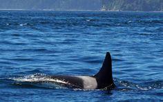 A whale that predates the Titanic is still splashing through the Pacific