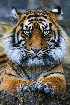 Very Beautiful  Cat  ♌