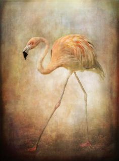 Doing the Flamingo walk...!  By: pauline fowler