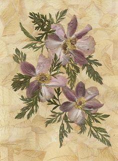 Pressed anemoneFlowers artPressed flowersDried flowersHome