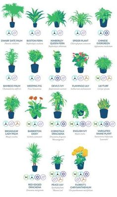Numerous people love to have plants in their homes, as they enrich the space, enhance its appearance and filter the air we breathe. Namely, trees and plants produce CO2 ( Carbon Dioxide) and convert it into oxygen, which is the crucial thing we need in...
