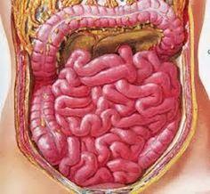 Bom funcionamento do intestino é essencial para a saúde | Cura pela Natureza