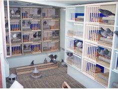 Great pigeon coop set up