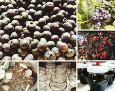 mermelada casera de arándanos para los desayunos especiales ☕ ¡deliciosa! 😋  Propiedades inmunológicas de los arándanos.  Una ración contiene tantos antioxidantes como cinco raciones de brécol, manzana o zanahoria. Ayuda a prevenir el cáncer y por su actividad antioxidante fortalece los vasos capilares, mejorando la circulación y facilitando el transporte de sustancias nutritivas por todo el cuerpo. Lookbook Layout, Homemade Desserts, Blueberry, Stuffed Mushrooms, Vegetables, Fruit, Pretty, Food, Vases