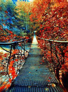 Walking through #Fall on a footbridge.  Glorious.