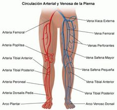 What is chronic venous insufficiency? Chronic venous insufficiency occurs when the leg veins do not allow blood to travel back to the heart. Varicose Vein Remedy, Varicose Veins, Arteries Anatomy, Vascular Ultrasound, Interventional Radiology, Vascular Disease, Peripheral Artery Disease, Nursing, Physical Therapy