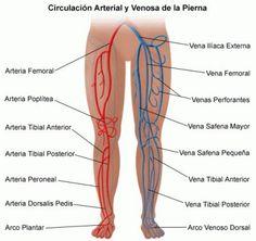 Las ulceras varicosas es un daño en el tejido cutáneo debido a la mala circulación de alguna vena en particular. Esto provoca que parte del tejido muera y se produzca la ulcera en la pierna o pie. Factores que generan el desarrollo de ulceras varicosas: -edad a partir de los 60 años -problemas de circulación sanguínea -obesidad -herencia -estreñimiento crónico -tener varices -padecer diabetes Síntomas de ulceras varicosas: -dolor intenso -mal olor -supuración de la ulcera -edemas…