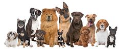 Capital Canine Club provide best dog daycare services in McLean,VA. We have been providing exceptional animal boarding, grooming, and training services. Popular Dog Names, Smartest Dog Breeds, Female Dog Names, What Dogs, Dog Facts, Tier Fotos, Weimaraner, Dog Show, Labradoodle