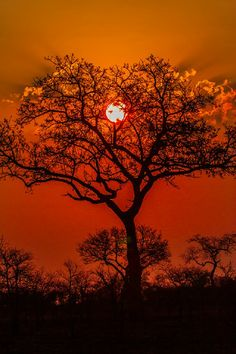 """artpropelled: """" Photograph taken at Kruger National Park, South Africa by Jacques de Klerk. All Nature, Amazing Nature, Cool Pictures, Beautiful Pictures, Beautiful Sunset, Ciel, Belle Photo, Mother Nature, Nature Photography"""