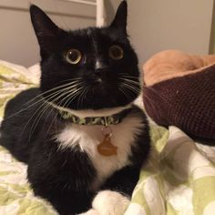 Lost!My cat Lennon is missing from Cokesbury Road in Lebanon Borough, NJ from the 9th of April. Lennon is 2 years old, 4 white feet white stomach and chest with a white spot on his nose. He is a short bodied cat that is chunky with bright yellow eyes. He is super friendly and lovesRead More