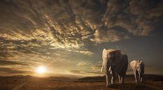 """Walking in Savannah"" by jacksoncarvalho | From Afar: Wildlife Photo Contest Winners Blog - ViewBug.com"