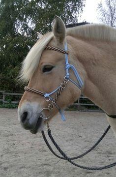 #HorseCharms #bridle #bitless #ropehalter #ridinghalter #halter #horsetack #rope #horse #fjord