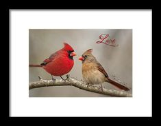 Love Framed Print by Bonnie Barry. All framed prints are professionally printed, framed, assembled, and shipped within 3 - 4 business days and delivered ready-to-hang on your wall. Choose from multiple print sizes and hundreds of frame and mat options.