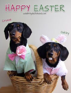 Happy Easter - from my brother Oakley and I