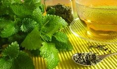Lemon Balm is a memory boosting, anti-anxiety nootropic also known as Melissa officinalis. It is a plant from the mint family and considered to be a calmin